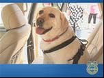 Bark Buckle UP Top 10 Pet-Safe Vehicles Photo